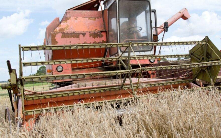 МВД Беларуси о битве за урожай: воруют прямо с полей