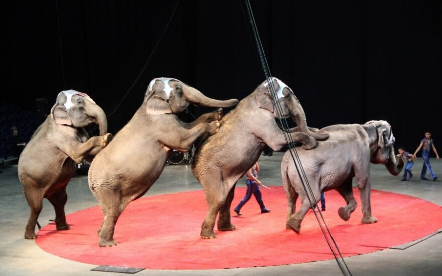 Правительство Литвы планирует запретить использование диких животных в цирке