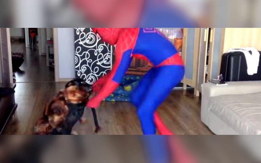 Spiderman i pies - pająk Chica