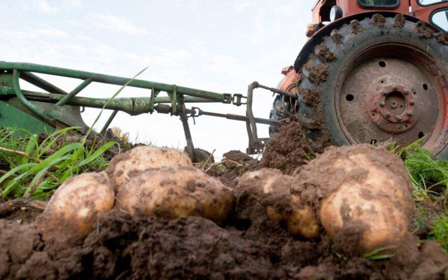 Фермер: цены на картофель ненормальные