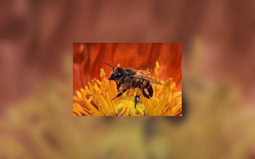 В борьбе с похмельем поможет мед