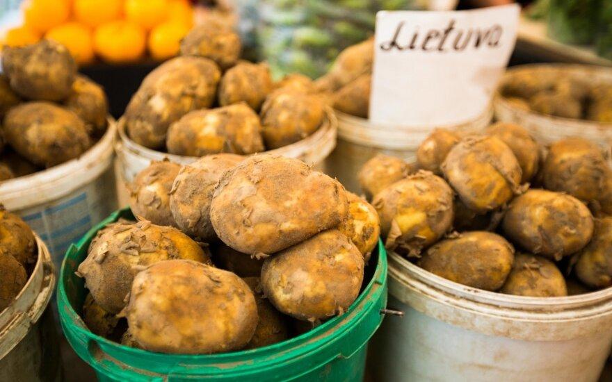 Молодой картофель появился раньше, но он дороже