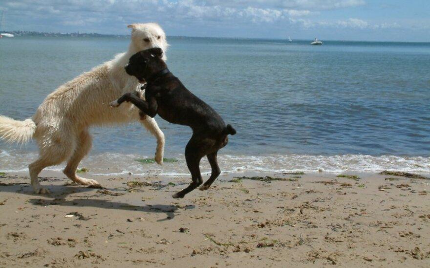 Šunys paplūdimyje