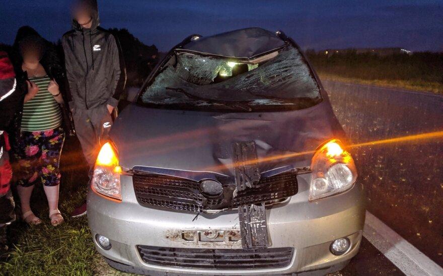 На окраине Вильнюса автомобиль сбил лося
