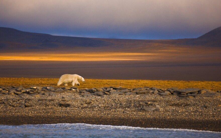 Зеленое будущее стоит $3 трлн. Деньги есть, план есть: упустит ли мир шанс остановить потепление?