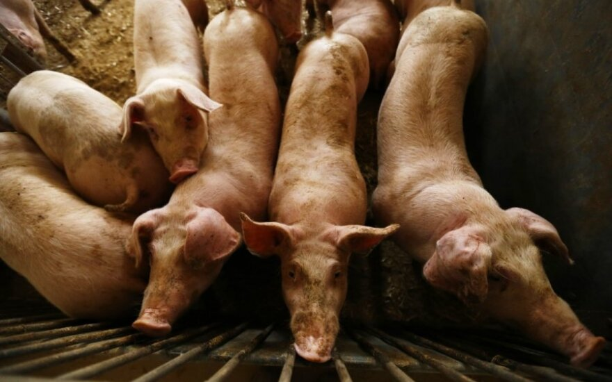 Свиноводы Литвы требуют отделить Беларусь забором