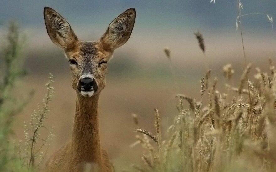 Литовские суды снисходительно отнеслись к пьяному охотнику