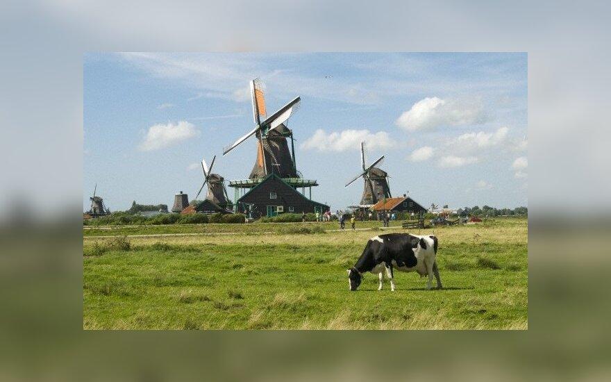 Holandia: Ataki na Polaków