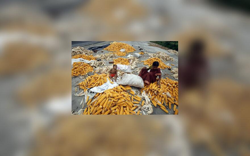 Kukurūzai, motina su vaiku, darbas