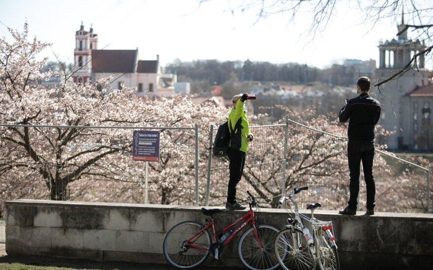 В Вильнюсе закрыли парк сакур из-за большого скопления людей