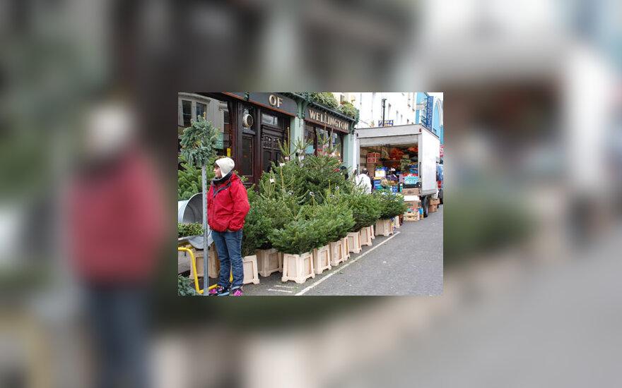 Gatvėje pardavinėjamos eglutės
