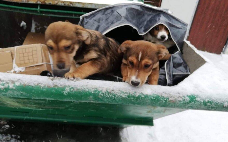 Kaune išmesti šuneliai