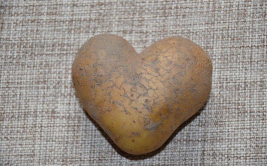 Ziemniak w kształcie serca, fot. Renata Dunajewska DSC_0412