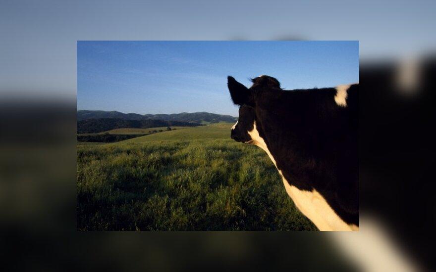 Пятидесятница – радость для коров и купальщиков
