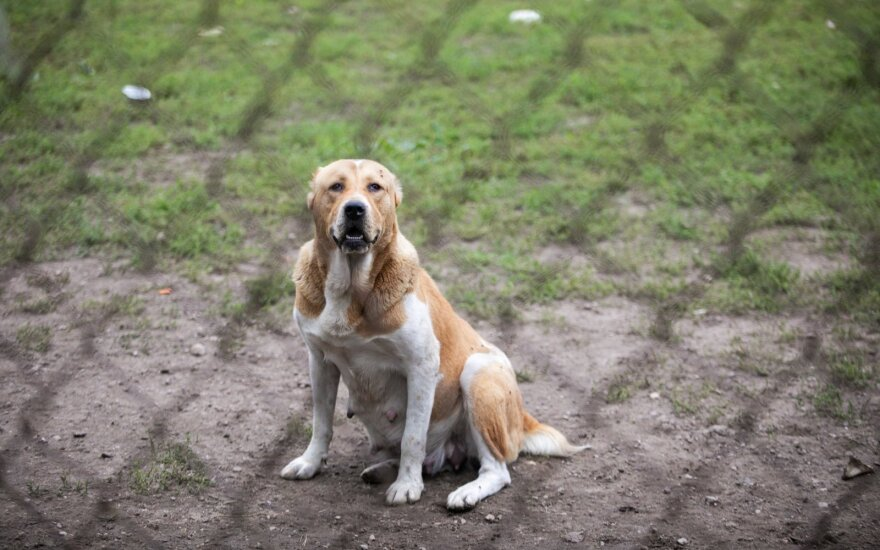 Реакция сельских жителей потрясла спасавших собак волонтеров: нас оскорбляли