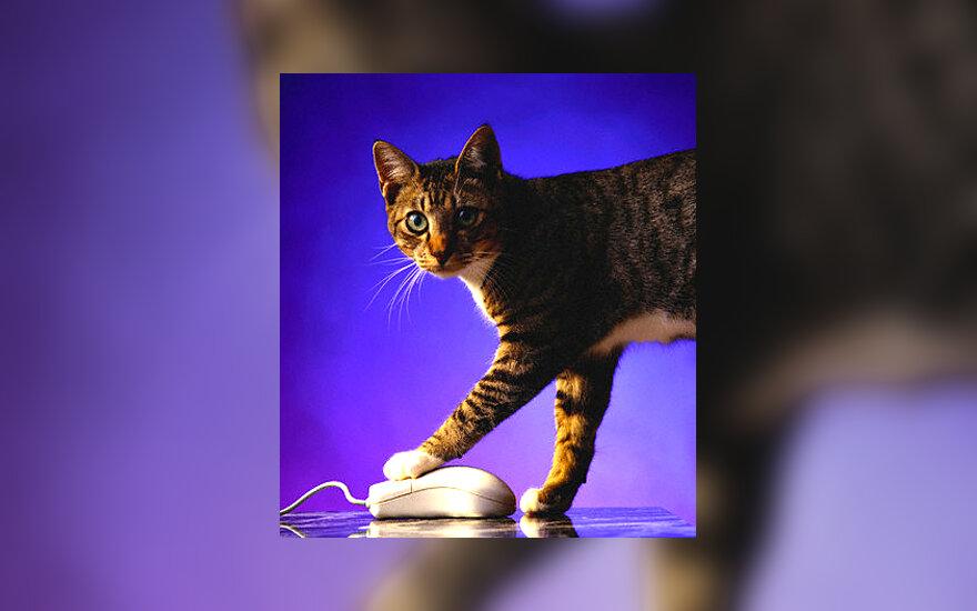 Katė ir kompiuterio pelė