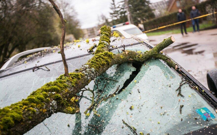 Литовские пожарные получили 92 сообщения о поваленных бурей деревьях