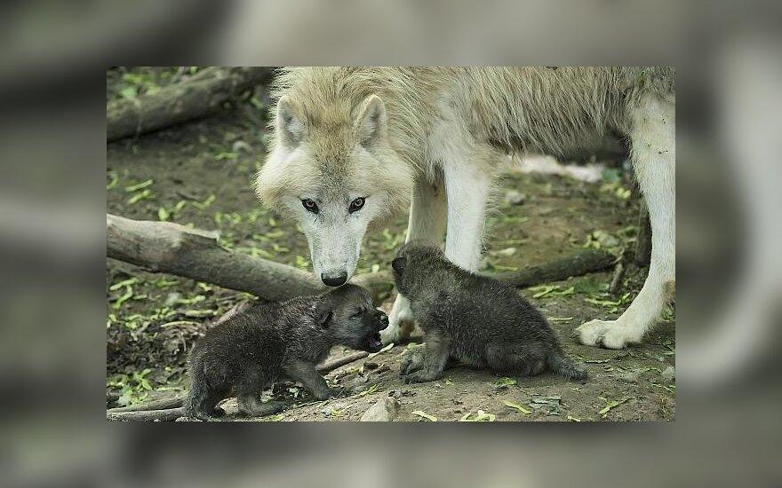 Polak Polakowi wilkiem... Czy w dzisiejszych czasach można zaufać?