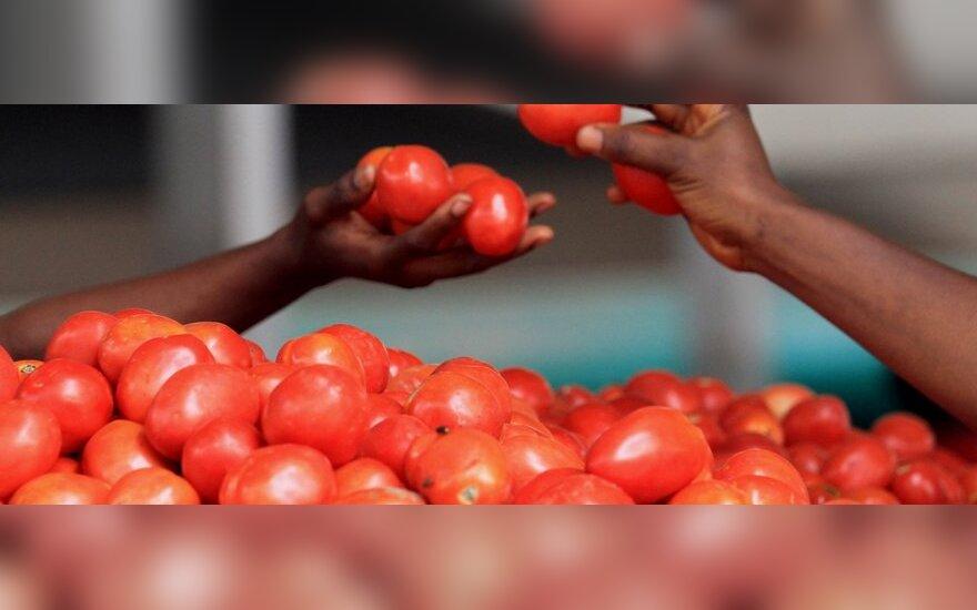 Из-за запрета на экспорт в Россию могут сильно подешеветь огурцы и помидоры