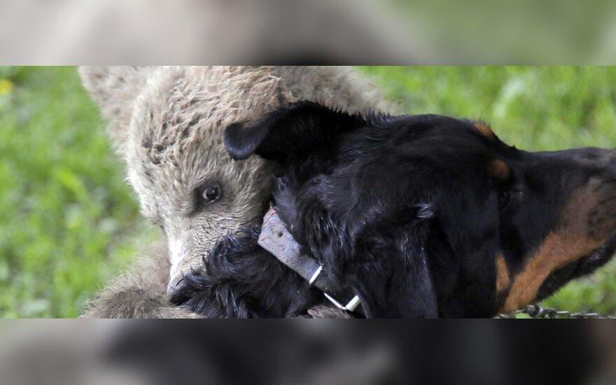 Бурый медвежонок подружился с щенком