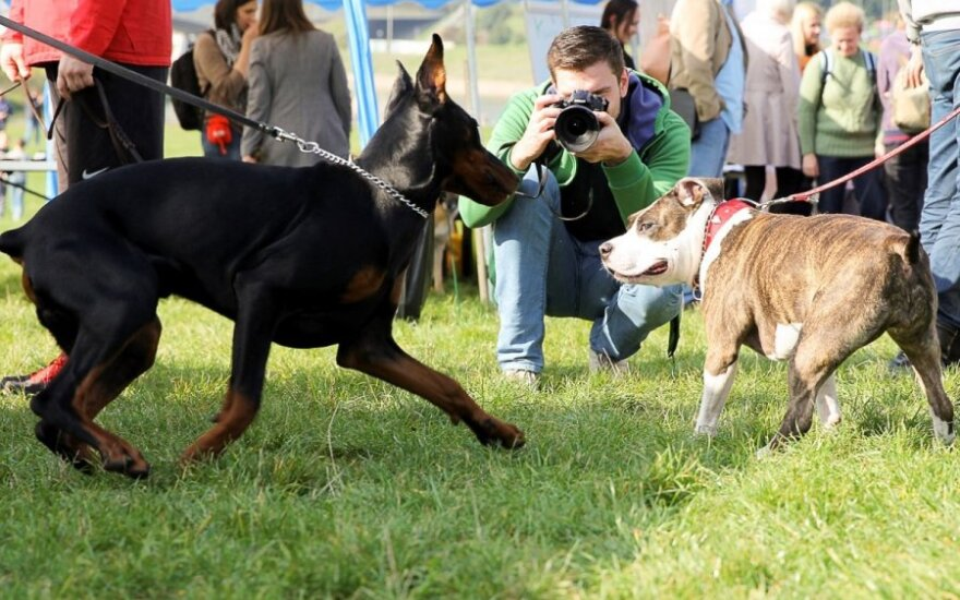 Polskie i litewskie psy zagrożeniem w UK