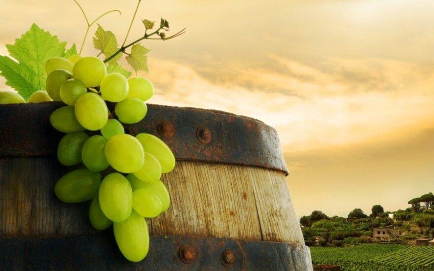 Вино и продукты: выбираем идеальную пару