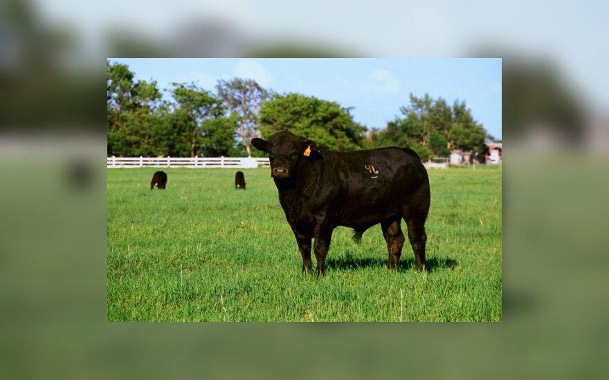 Турки скупают литовских быков