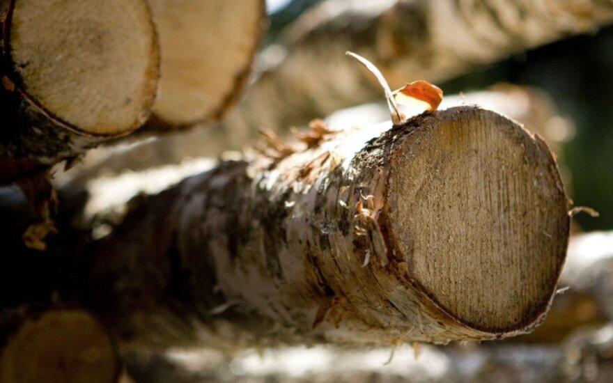Supjauti rąstai lieka gulėti miške