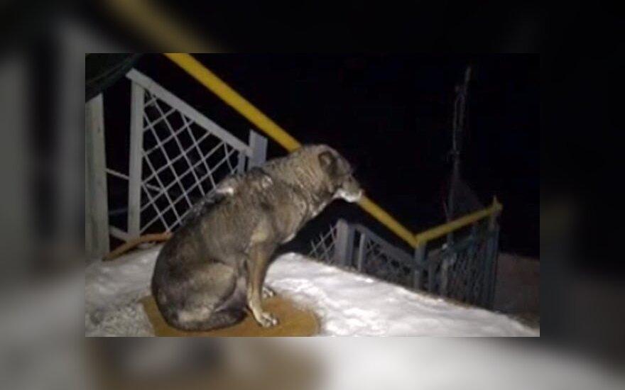 В Хабаровске пес несколько недель ждет хозяина у причала