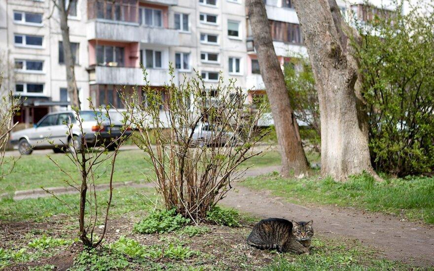 Когда отремонтируют вильнюсские дворы?