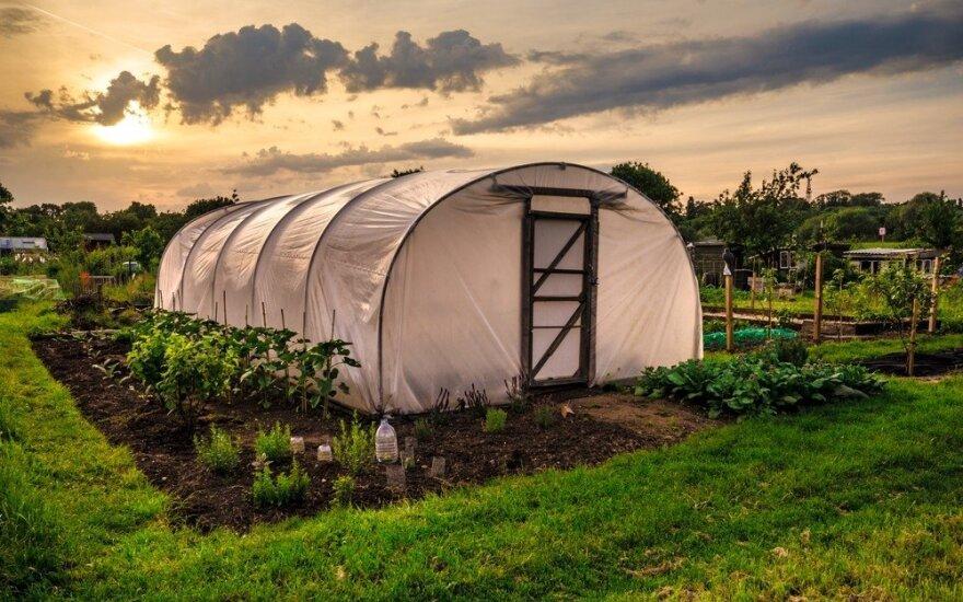 Эксперты: Россию ожидает новый огородный бум