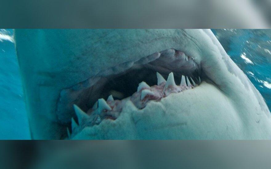 У острова Русский видели акулу огромных размеров