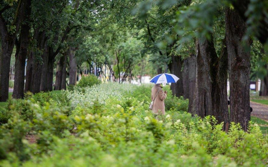 Погода: приближается дождливый период
