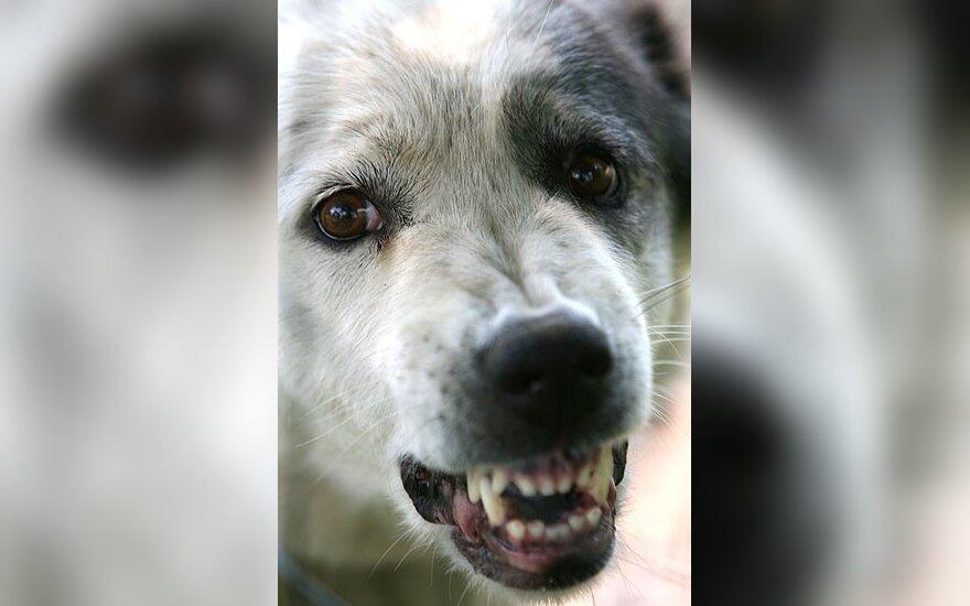 Собака покусала 2-летнюю девочку