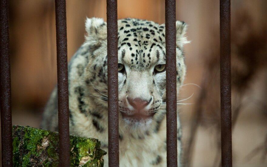 Kauno zoologijos sodas