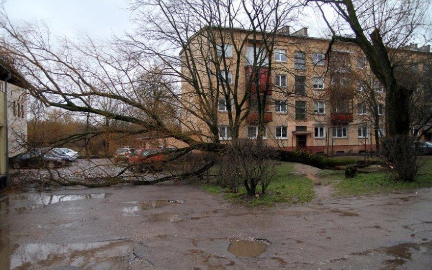 Сильный ветер уже валит деревья