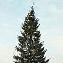 Kalėdų eglutė Klaipėdoje