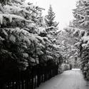 Takas pasidengęs sniegu