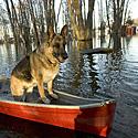Vyras su šuniu plaukia valtimi per apsemtą vietovę