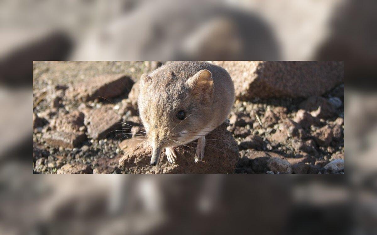 varpos ir pelės ausys