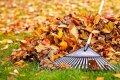 Specialistai pataria: ar rudeniniai lapai tinka kompostavimui?