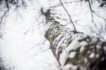Orai: ruoškitės – driokstelės šaltis