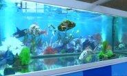 Olimpinių žaidynių akvariumuose - tikroviški robotai-žuvys