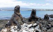 Rojaus salos – Galapagai
