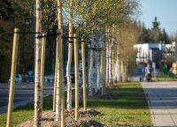 Primena dėl daugiabučių kiemuose augančių medžių genėjimo: reikia derinti su seniūnija