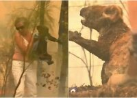 Išgirdusi pagalbos šauksmą, moteris nedvejojo: iš liepsnų išgelbėtą gyvūną lanko iki šiol