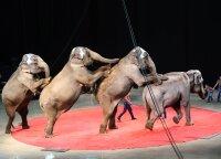 Kėdainiuose atšaukė sprendimą dėl cirko su laukiniais gyvūnais pasirodymų uždraudimo