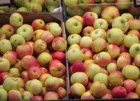 Profesorius pasakė, kaip apdoroti vaisius ir daržoves, kad į mūsų organizmą patektų kuo mažiau pesticidų