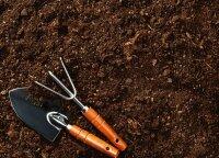 Kaip atgaivinti rūgštų dirvožemį