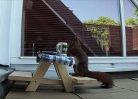 Nuobodžiaujančius bavarus pralinksmino voverytė